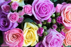 Background of bright roses blurred stock images