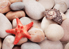 Background of the bright sea stones with starfish Royalty Free Stock Images