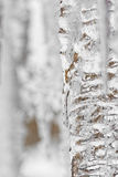 Background of bright transparent hanging down icicles. Ice texture Stock Image