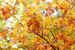 Background of bright yellow and red autumn leaves Stock Photo