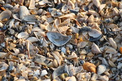 Background of broken seashell fragments on the sandy beach of Southern Ukraine. Stock Image