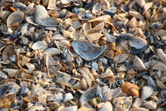 Background of broken seashell fragments on the sandy beach of Southern Ukraine. Royalty Free Stock Photography