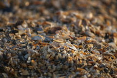 Background of broken seashell fragments on the sandy beach of Southern Ukraine. Royalty Free Stock Image