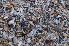Background of broken seashell fragments on the sandy beach of Southern Ukraine. Royalty Free Stock Photo