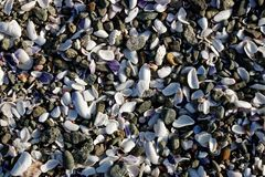 Background of broken shell and pebbles on a beach Stock Photography