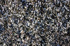 Background of broken shell and pebbles on a beach Royalty Free Stock Image
