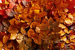 Background of bronzed autumn leaves Royalty Free Stock Photography