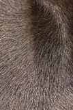 Background brown animal fur Royalty Free Stock Images