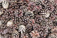 Background brown cones Royalty Free Stock Image