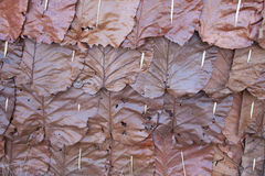 Background of brown dried leaf. The background of the brown dried leaf Stock Photography