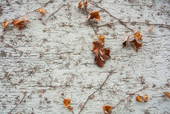 A background with brown dry grape branches and leaves rising on a white rough painted wall Stock Photo
