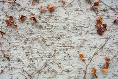 A background with brown dry grape branches and leaves rising on a white rough painted wall Royalty Free Stock Photo