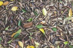 Brown Dry leaves fall on the ground in garden. stock images