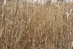 Background of brown grass Stock Images