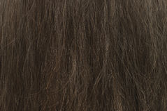 Background brown hair Royalty Free Stock Image