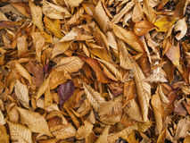 Background of brown leaves Royalty Free Stock Photography