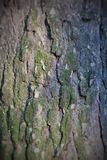Background brown pine bark Royalty Free Stock Images