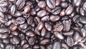 Seeds coffee Background texture Royalty Free Stock Image