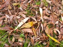 Background of brown and yellow fallen autumn leaves ground. Essex; England; UK Royalty Free Stock Photo