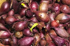Background - bulbs of red onion, intended for planting Royalty Free Stock Images