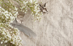 Background with bunch of Baby's-breath Stock Photography