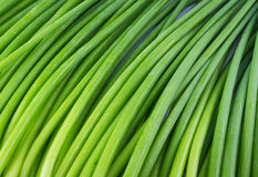 Background of A bunch of fresh Garlic chives flowers (green Nira Stock Photography