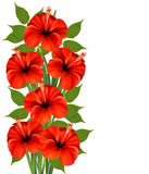 Background with a bunch of red flowers. Royalty Free Stock Photo