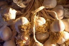 Background of the bundles of organic garlic on Stock Photos