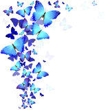 Background of butterflies Stock Image