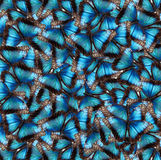 Background from butterflies. Blue Butterflies in the background royalty free stock photos