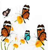 Background with  butterflies and chamomiles Stock Images