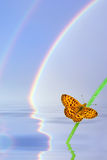 Background with butterflies and rainbows