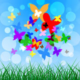 Background Butterflies Represents Summer Time And Creature Royalty Free Stock Photos
