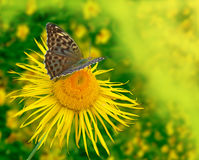 Background with the butterfly Royalty Free Stock Photo