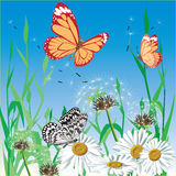 Background with butterfly. Vector. Stock Image