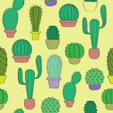 Background with cacti Stock Photos