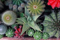 Top view cactus garden ,center focus. stock image