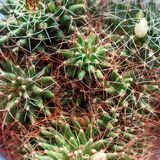 Background of cactus close-up. Top view stock photo