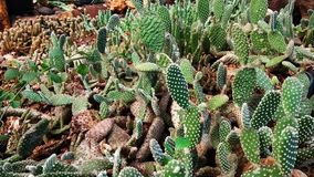 Cactus garden. The background of cactus garden concept background royalty free stock images