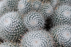Background cactus pattern. Needles and pins, background cactus pattern royalty free stock image