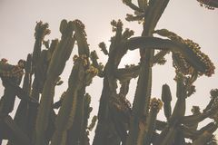 A background of cactus stock photo