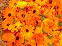 Background with Calendula. Medicinal herbs. Summer royalty free stock photos