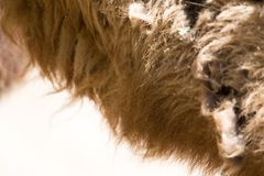 Background of camel wool Stock Image
