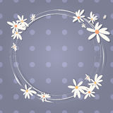 Background with camomiles. Vector illustration. Royalty Free Stock Photography