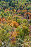 Background of a Canadian forest in the fall. The fall colours, the dense forest can only be a North American image, its almost iconic Stock Images