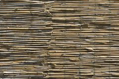 Background of cane Stock Images
