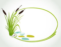 Background with cane. Vector ilustration. Background with lily and cane. Vector illustration Stock Photography