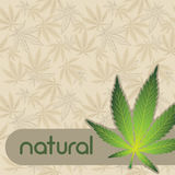 Background with cannabis. Royalty Free Stock Images