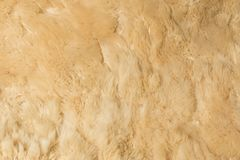 Background of a carpet woolly sheepskin stock photography