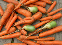 Background from carrot Stock Image